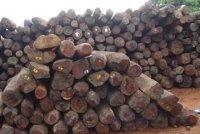 Comment mettre fin à la crise du bois à Madagascar